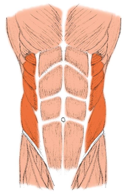 Abnehmen am Bauch – Die schrägen Bauchmuskeln beugen den Oberkörper zur Seite und nach vorn