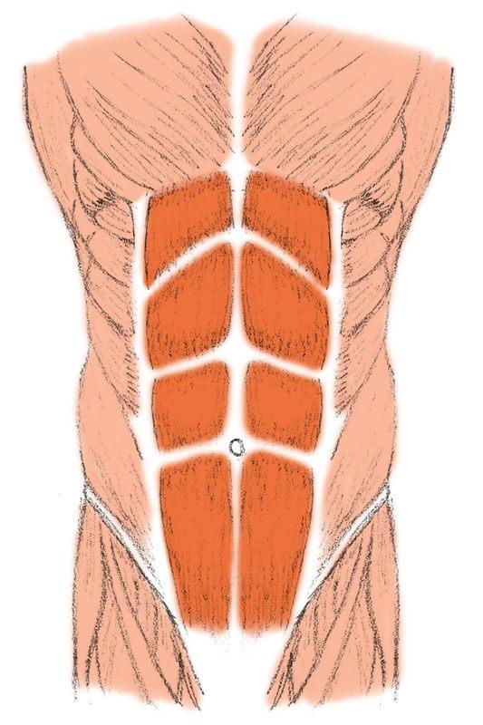 Abnehmen am Bauch – Der gerade Bauchmuskel bildet optisch den sogenannten Waschbrettbauch